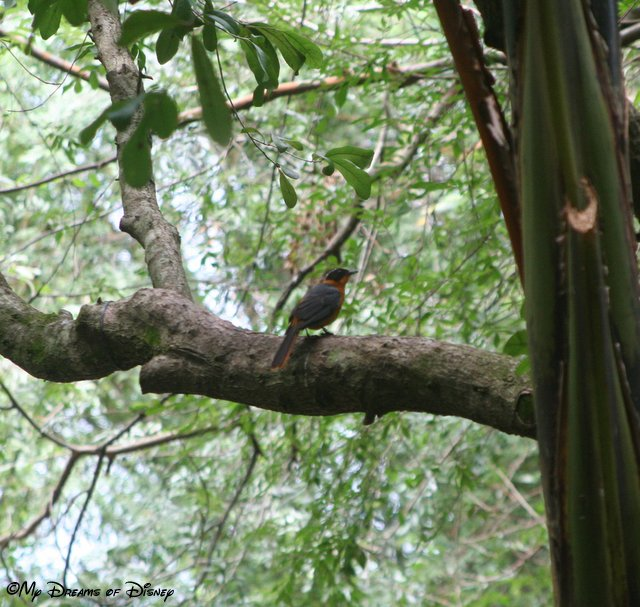 Pangani Forest Exploration